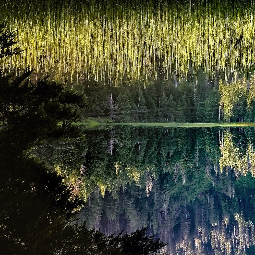 Reflection on the water of the tree surrounding Bear Lake in Bothell, Washington.