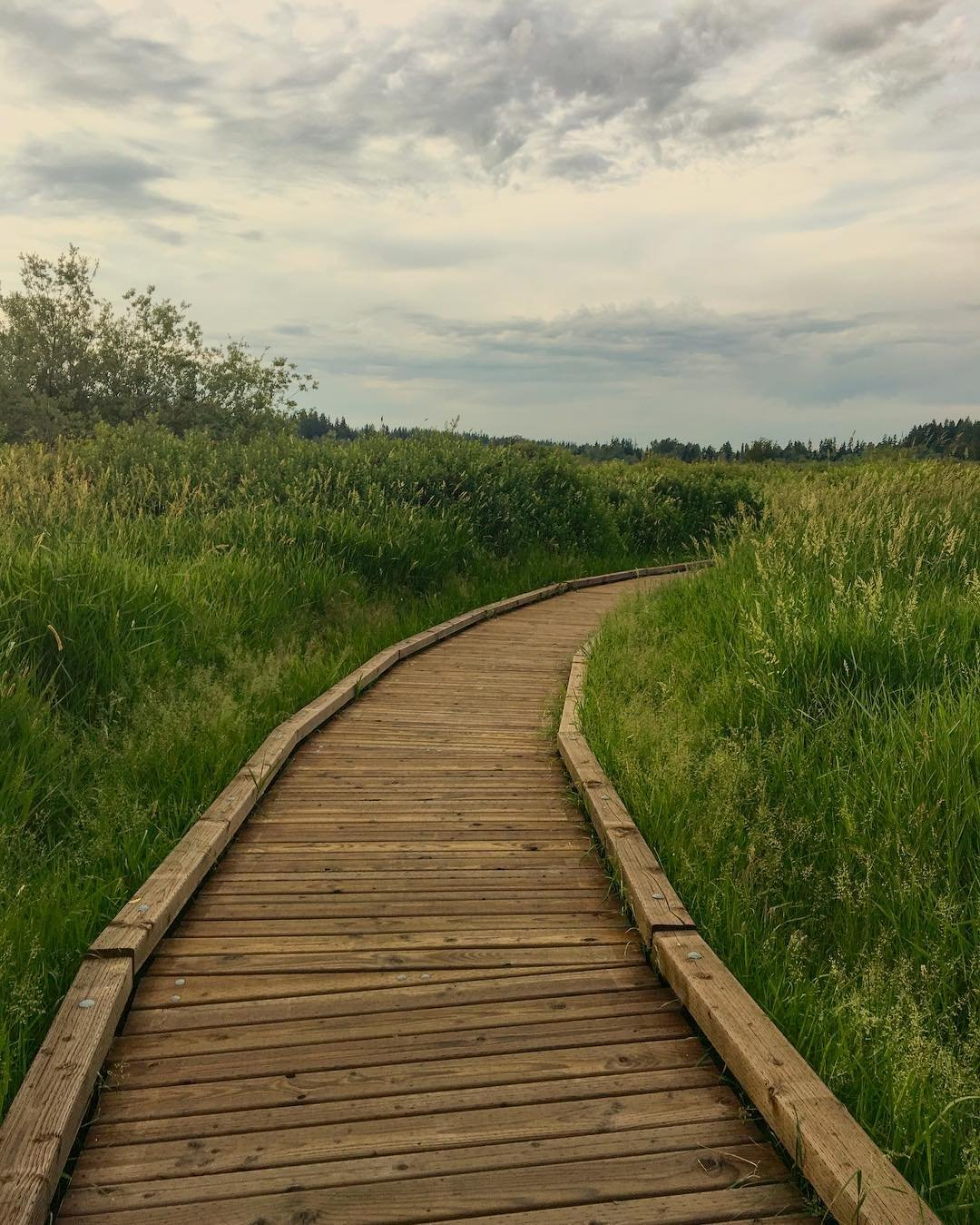 View of the boardwalk path along the North Creek Trail in Bothell, Washington.