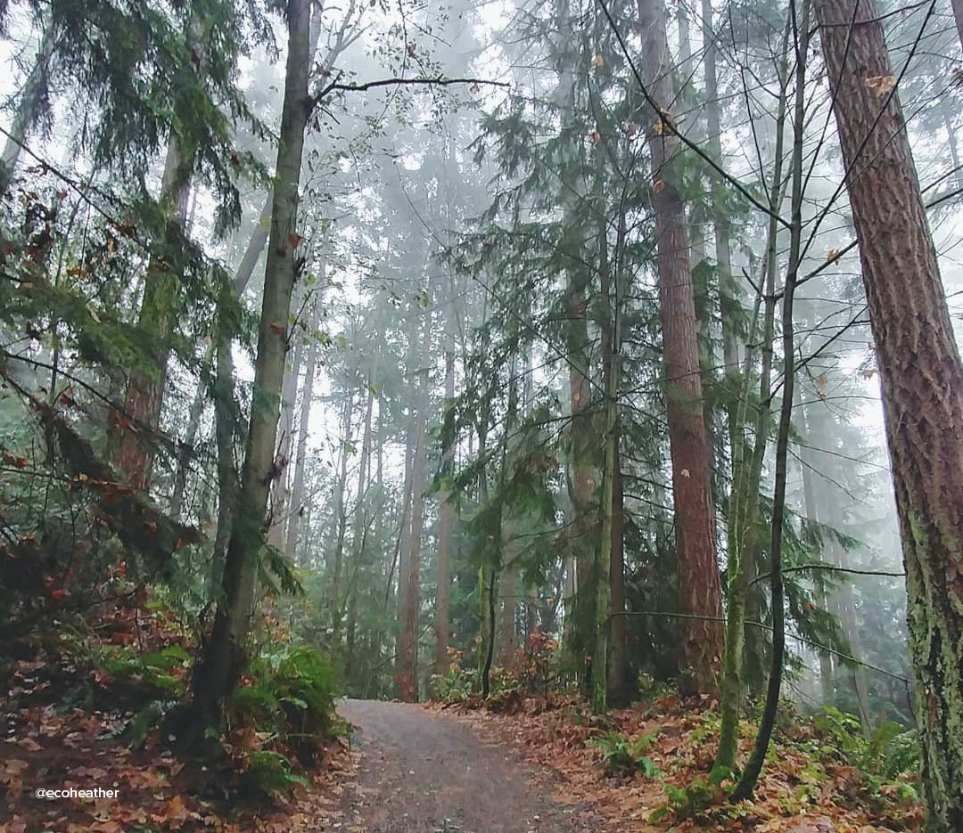 Hiking path surrounded by trees at Saint Edward's State Park near Bothell, Washington.