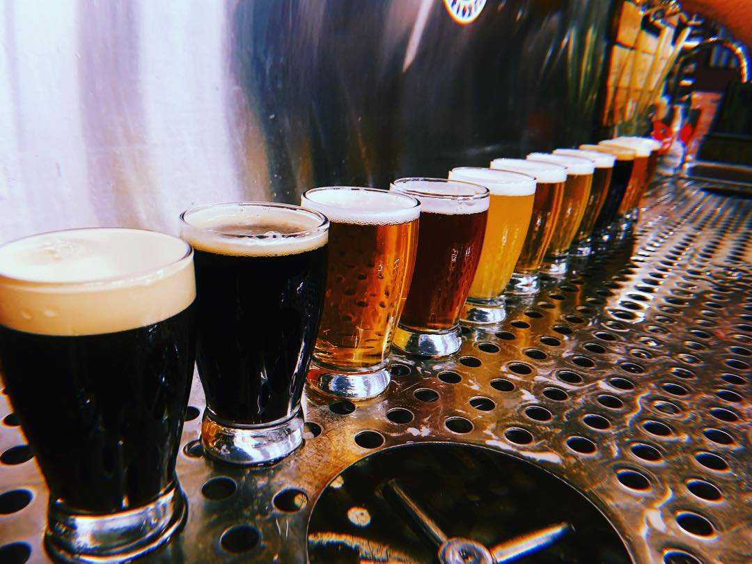 Tasting glasses of beer lined up on the bar at Triplehorn Brewing near Bothell, WA.