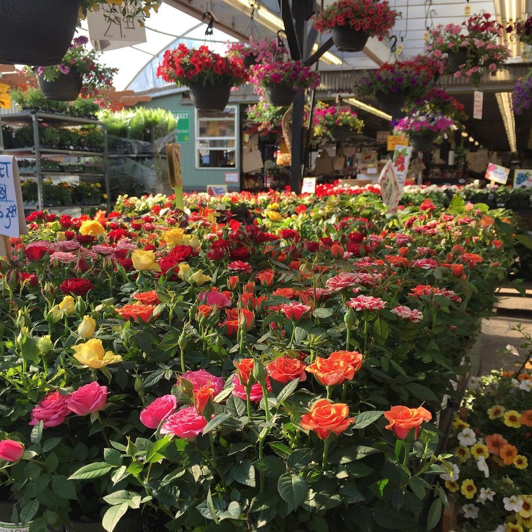 Flowers and plants for sale outside of Yakima Fruit Market in Bothell, Washington.