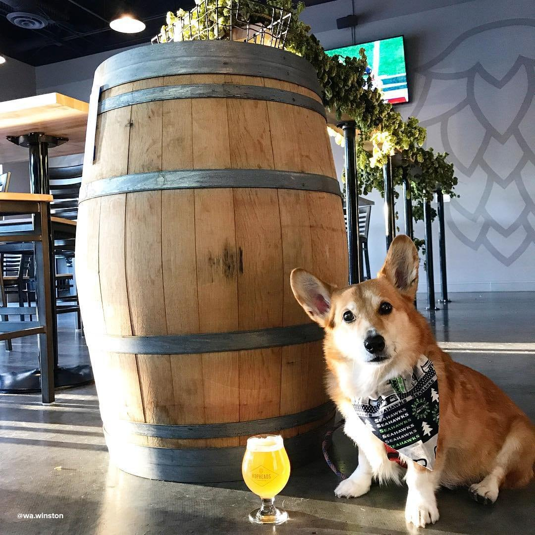 Dog sitting next to a glass of beer at Hopheads Taproom near Bothell, Washington.