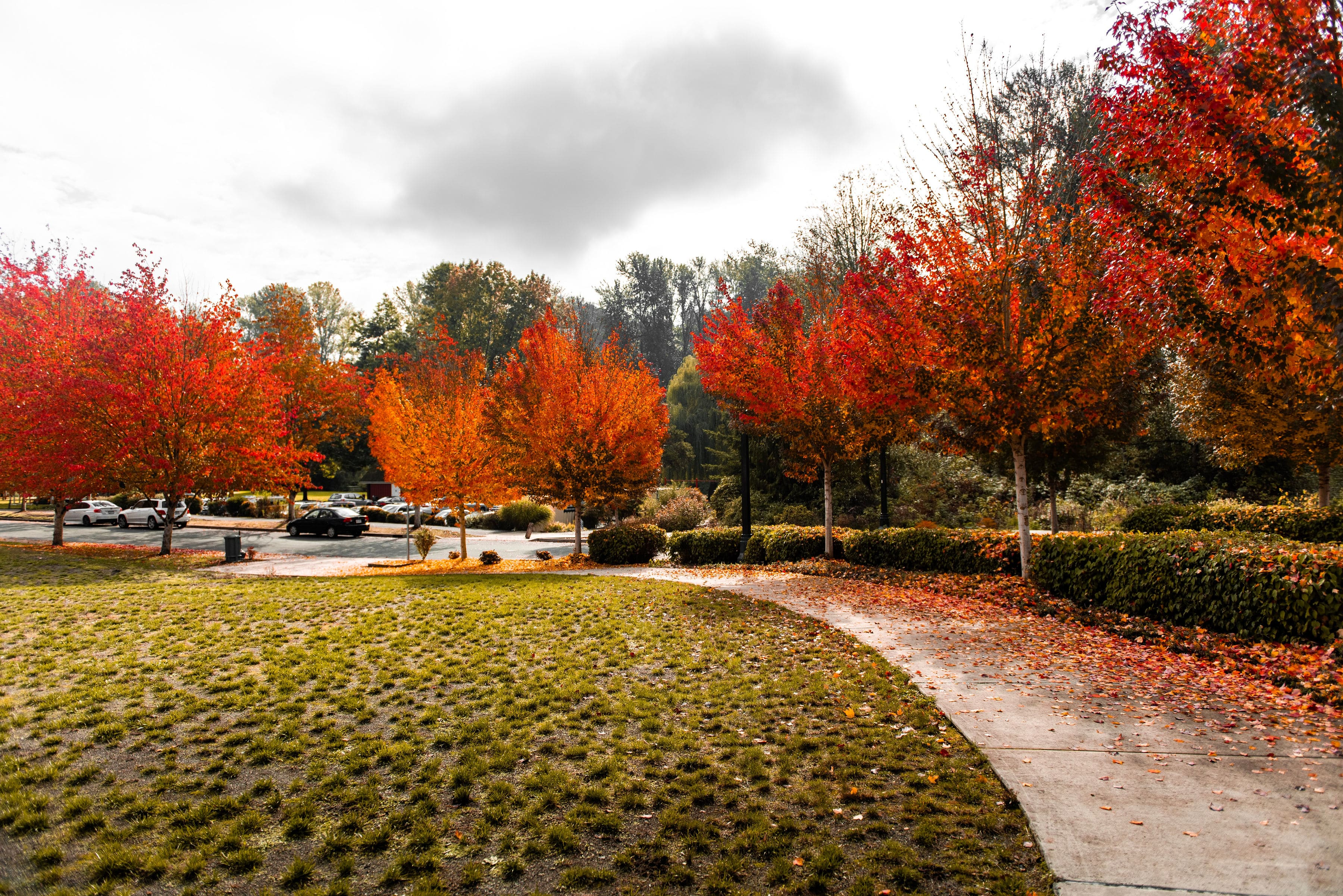 Fall foliage in Bothell.