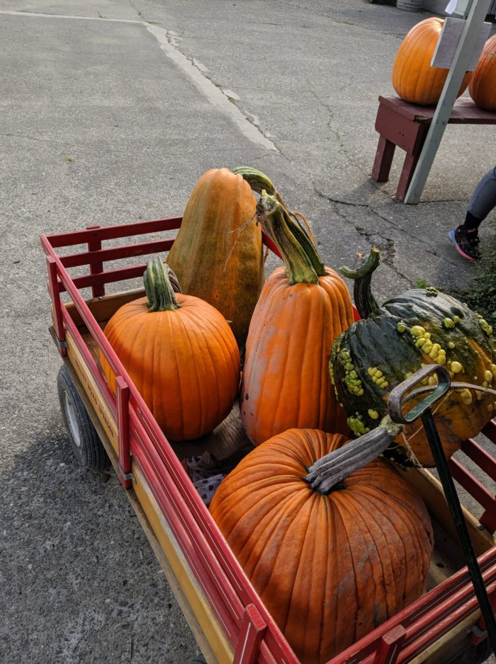 Pumpkins in a wagon at Craven Farm