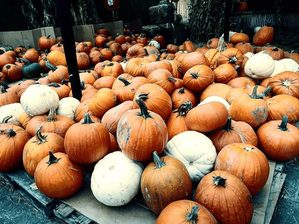 Pumpkins at Yakima Market